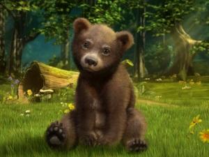 Bear cub forest